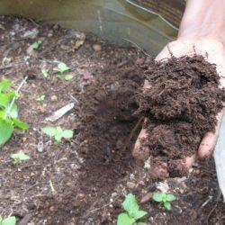 Compost_Finale-250x250
